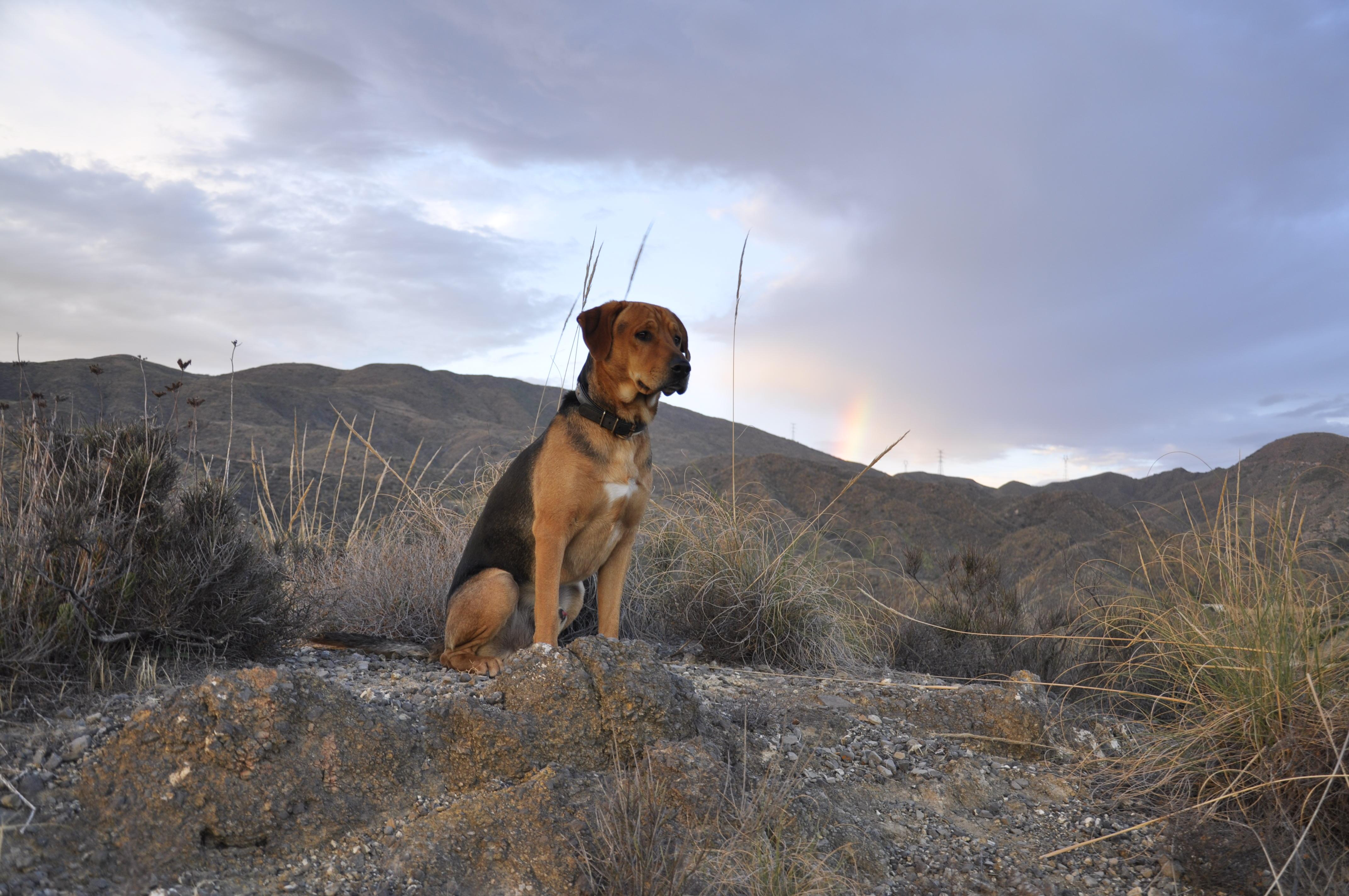Hund vor schöner Landschaft